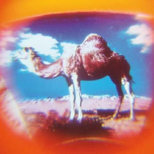 Mini κάμερα View Master «Άγρια Ζώα» (13163)