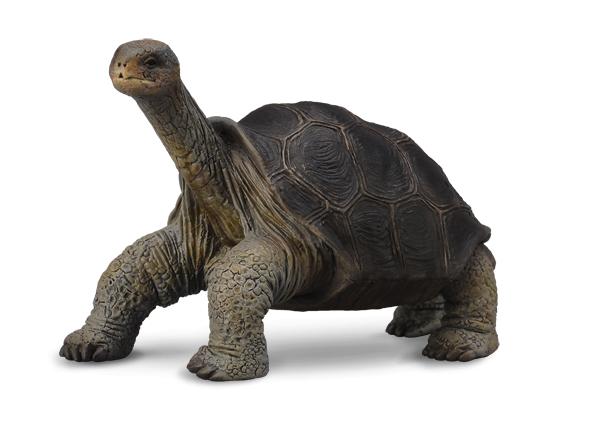 squirt της χελώνας καυτά δωρεάν καρτούν σεξ